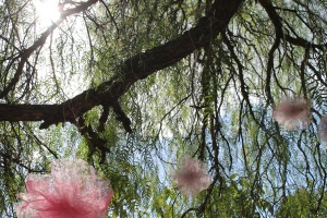 Tutus in the Trees
